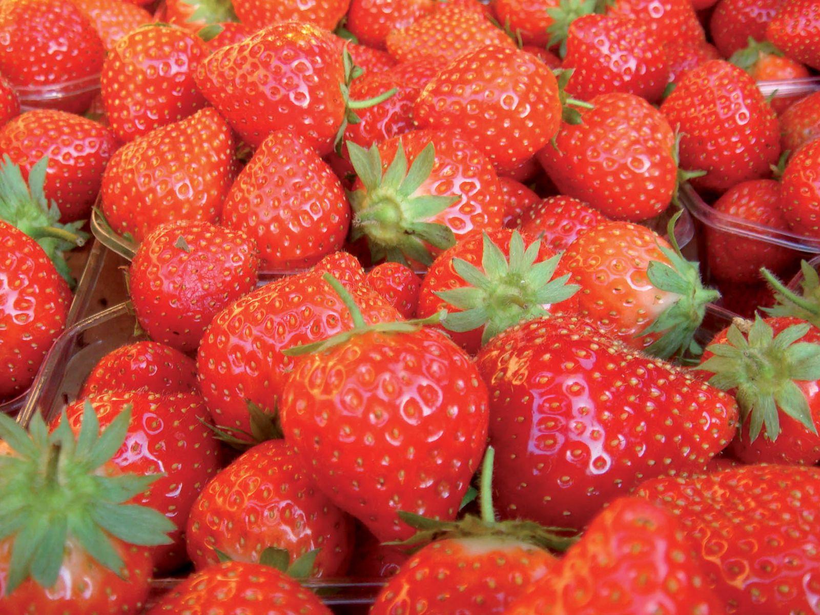 Comment Entretenir Les Fraisiers En Automne comment planter et entretenir vos fraisiers ?